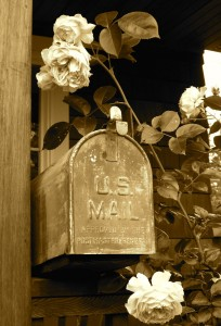 Mailbox and roses