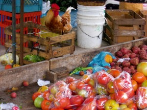 Rooster and tomatoes