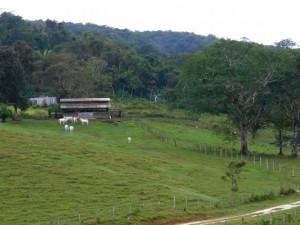 Farm in Belize