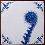 Sword fern fiddlehead