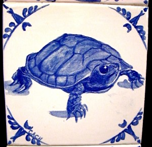 Western pond turtle -- sold