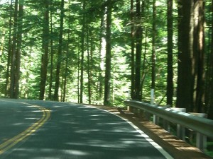 A shady drive with lots of twists and turns.