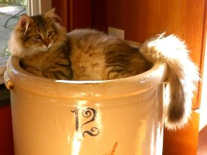 Snorri in his crock.