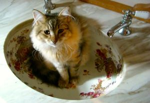 Snorri liked sleeping in the antique sink.