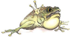 frog-original